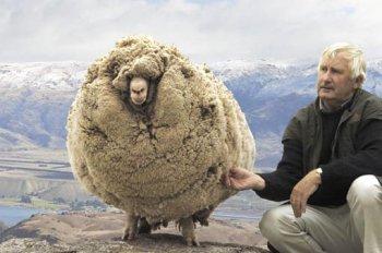 ac2381068c3 La face cachée de la laine -- Jérôme HENRIQUES