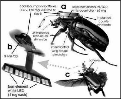 insecte-dron1381-0e2e5